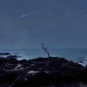 Lonely Tree over Jeju Sea
