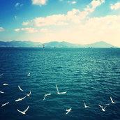 Seagull Dance in Yeosu