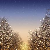 Winter night [LG Home]