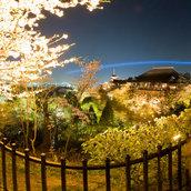 Kiyomizudera Night Sakura(Japan)
