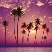 Aloha oe [LG Home]