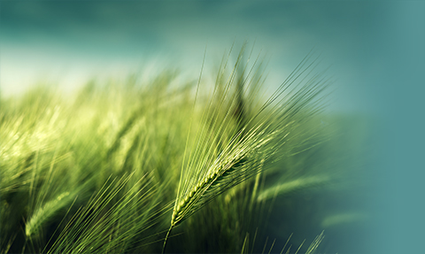 Recuperación verde