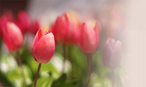 la fragancia buena de la flor.