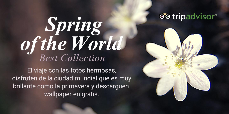 [Tripadvisor -  Colección mundial de Primaveras del mundo]